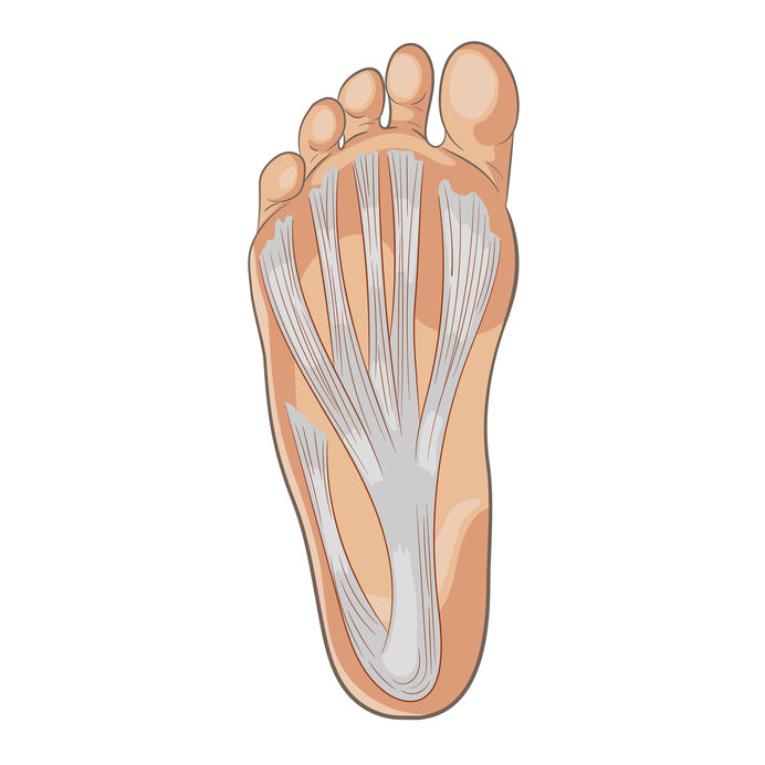 Foot sole illustration for biomechanics, footwear, shoe concepts, medical, health, massage and spa centers etc. Plantar fascia, aponeurosis. Colored vector isolated on white.